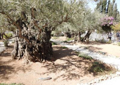 Mount-of-Olives